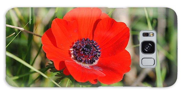 Red Anemone Coronaria 4 Galaxy Case