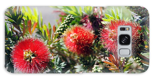 Callistemon - Bottle Brush 6 Galaxy Case