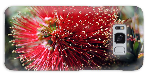 Callistemon - Bottle Brush 5 Galaxy Case