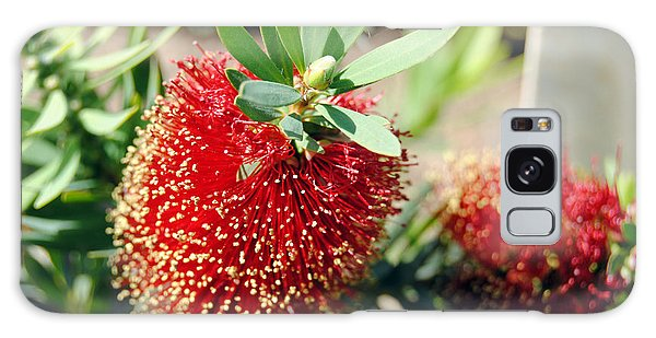Callistemon - Bottle Brush 4 Galaxy Case