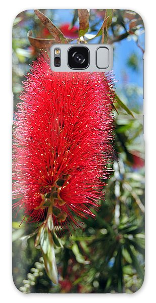 Callistemon - Bottle Brush 2 Galaxy Case