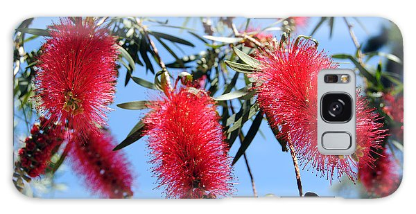 Callistemon - Bottle Brush 3 Galaxy Case