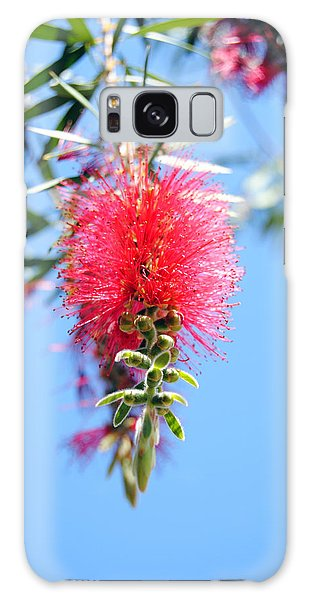 Callistemon - Bottle Brush 1 Galaxy Case