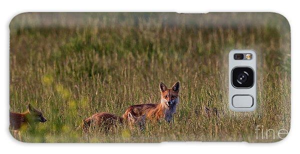 Red Fox Family Galaxy Case