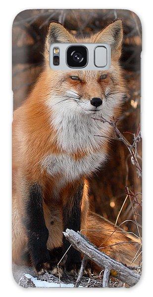 Red Fox Pausing Atop Log Galaxy Case