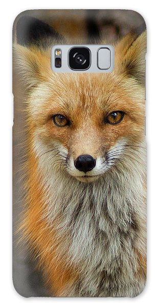 Red Fox Portrait Galaxy Case