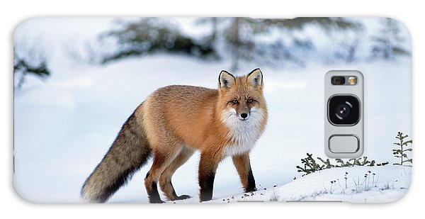 Galaxy Case featuring the photograph Red Fox Vulpes Vulpes Portrait by Konrad Wothe