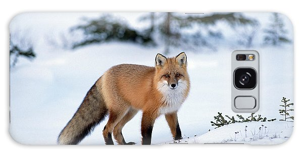 Red Fox Vulpes Vulpes Portrait Galaxy Case