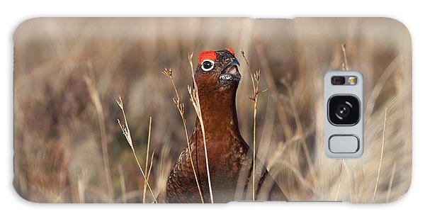Red Grouse Calling Galaxy Case