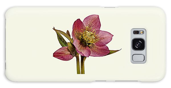 Galaxy Case featuring the photograph Red Hellebore Cream Background by Paul Gulliver