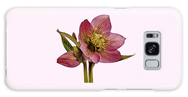 Red Hellebore Transparent Background Galaxy Case by Paul Gulliver