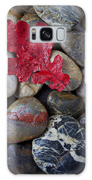 Rock Galaxy Case - Red Leaf Wet Stones by Garry Gay