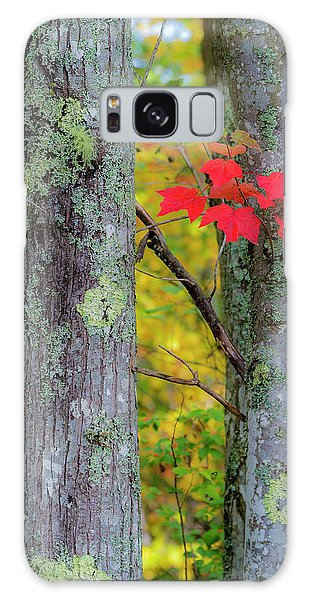Red Leaves Galaxy Case