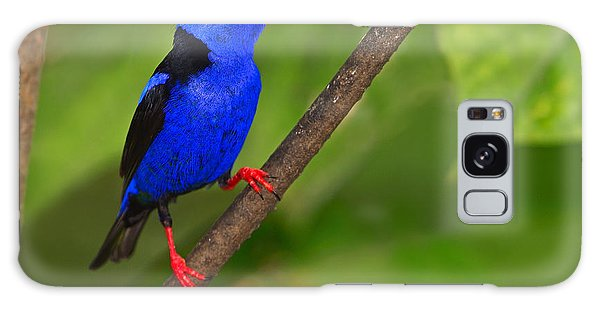 Red-legged Honeycreeper Galaxy Case