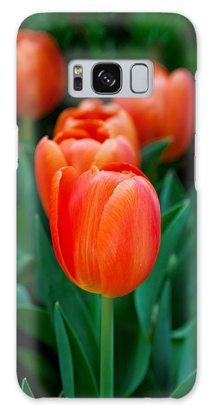 Tulip Galaxy S8 Case - Red Tulips by Az Jackson