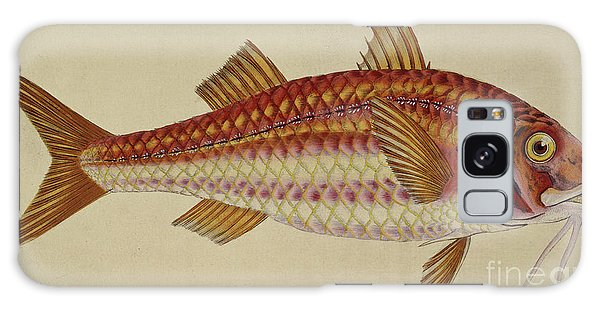 Sport Art Galaxy Case - Red Mullet by English School