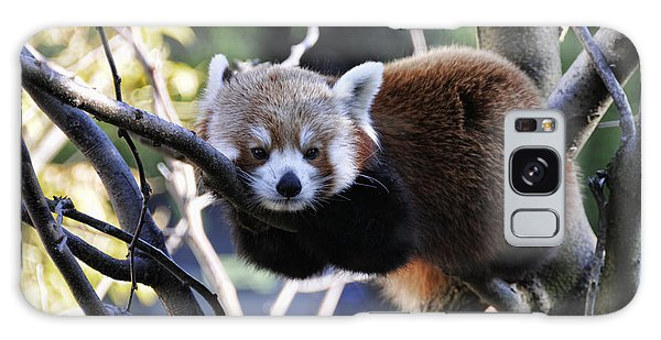 Red Panda Galaxy Case