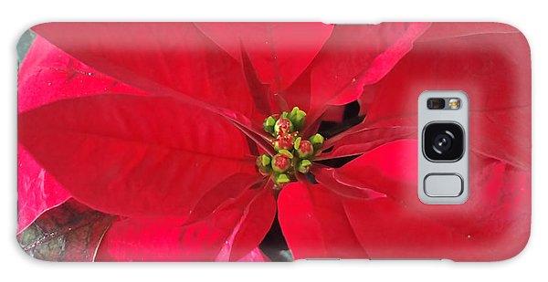 Red Poinsettia Galaxy Case by Pamela Walton
