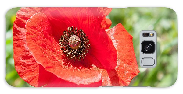 Galaxy Case - Red Poppy Flower Head by Iordanis Pallikaras