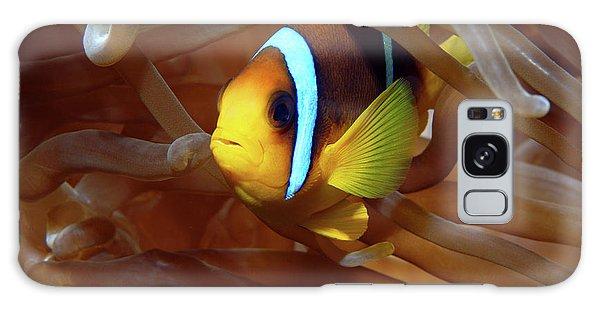 Red Sea Clownfish, Eilat, Israel 8 Galaxy Case