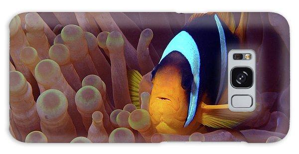 Red Sea Clownfish, Eilat, Israel 9 Galaxy Case