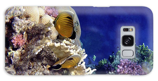 Red Sea Exotic World Galaxy Case