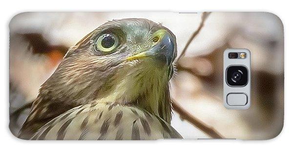Red-shouldered Hawk Fledgling 3 Galaxy Case