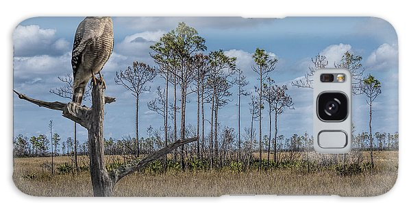 Red Shouldered Hawk In The Florida Everglades Galaxy Case