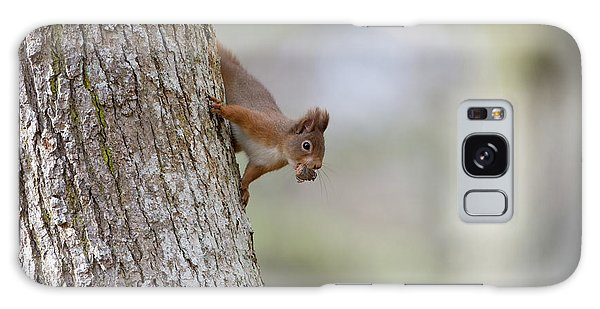 Red Squirrel Climbing Down A Tree Galaxy Case
