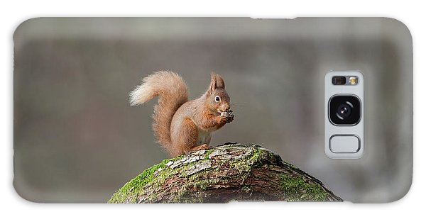 Red Squirrel Eating A Hazelnut Galaxy Case