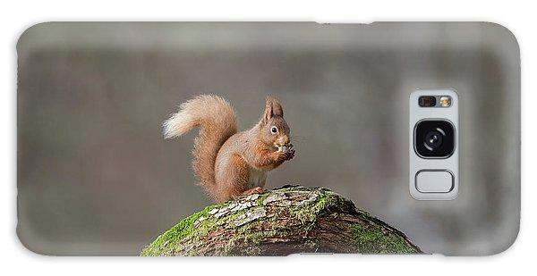 Red Squirrel Eating A Hazelnut Galaxy Case