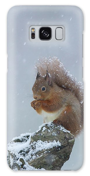 Red Squirrel In A Blizzard Galaxy Case
