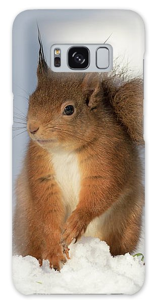 Red Squirrel In The Snow Galaxy Case