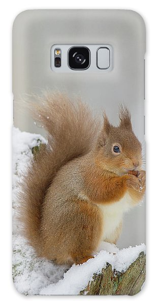 Red Squirrel In The Snow Side On Galaxy Case