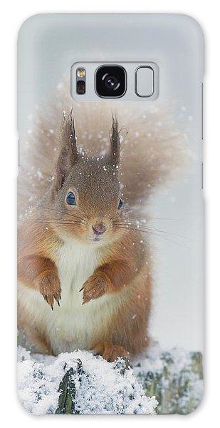 Red Squirrel In Winter Galaxy Case