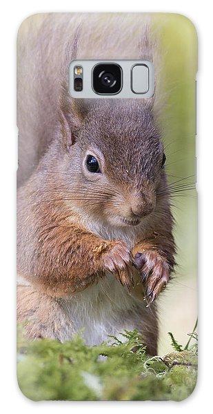 Red Squirrel - Scottish Highlands #1 Galaxy Case