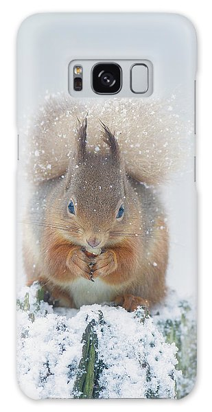 Red Squirrel Nibbles A Nut In The Snow Galaxy Case