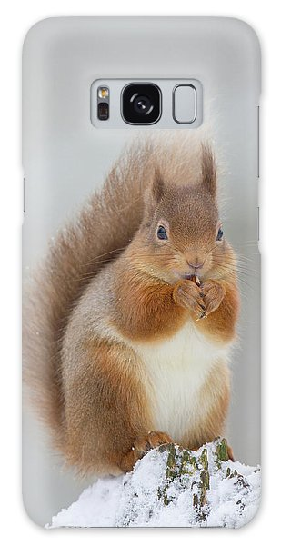 Red Squirrel Nibbling A Hazelnut In The Snow Galaxy Case