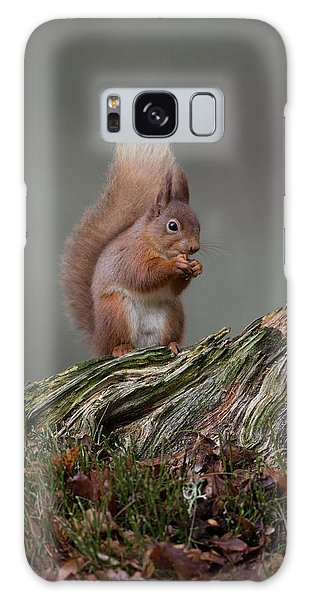 Red Squirrel Nibbling A Nut Galaxy Case