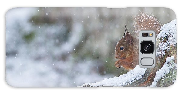 Red Squirrel On Snowy Stump Galaxy Case