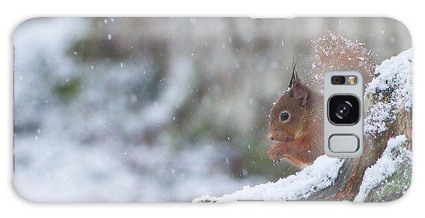 Red Squirrel On Snowy Stump Galaxy Case