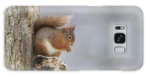 Red Squirrel On Tree Fungus Galaxy Case