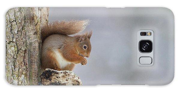 Red Squirrel On Tree Fungus Galaxy Case