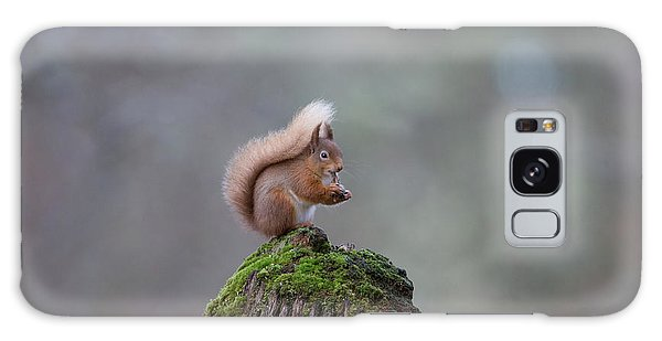 Red Squirrel Peeling A Hazelnut Galaxy Case