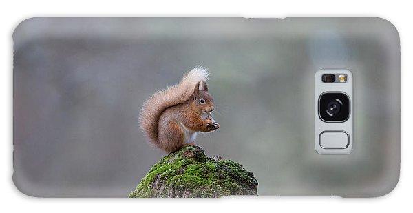 Red Squirrel Peeling A Hazelnut Galaxy Case
