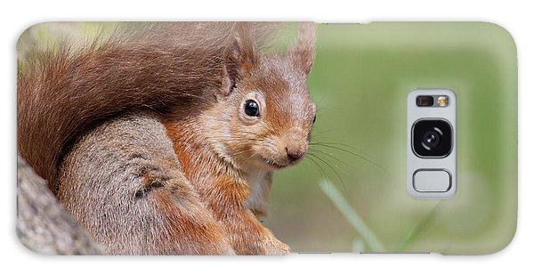 Red Squirrel - Scottish Highlands  #17 Galaxy Case