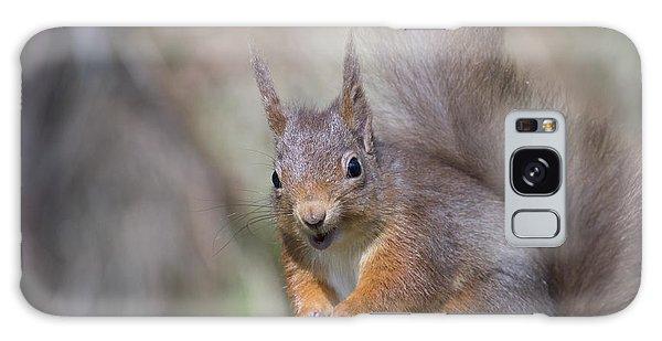 Red Squirrel - Scottish Highlands #26 Galaxy Case
