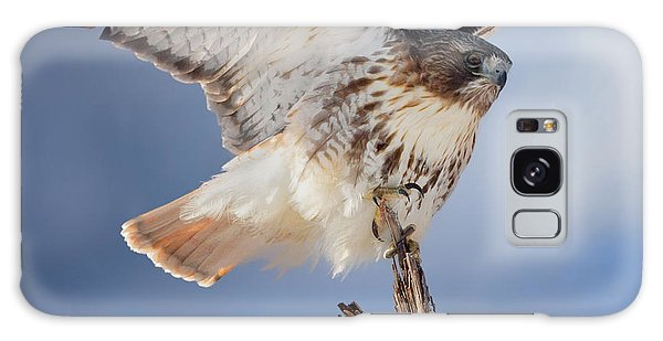Galaxy Case featuring the photograph Red Tail Hawk Perch by Bill Wakeley