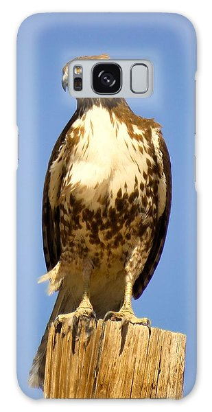 Red-tailed Hawk On Post Galaxy Case