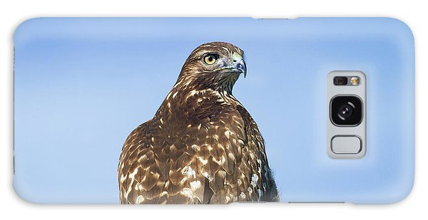 Red-tailed Hawk Perched Looking Back Over Shoulder Galaxy Case